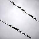 Birds on a Wire by James Troi