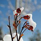 Frozen Berries by NancyC