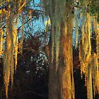 The Glowing Tree by Wanda Raines