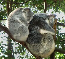 Koala see Koala do by flahless