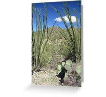 Sonoran Scenery Series ~ 4 ~ Greeting Card