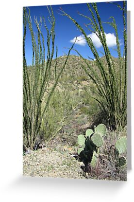 Sonoran Scenery Series ~ 4 ~ by Kimberly Chadwick