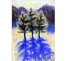 Three Pines. Snow in Virginia Photographic Print