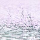 I had a purple dream by Dominika Aniola