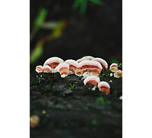 pink bracket fungus Photographic Print