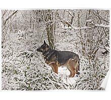 Shepherd in the snow Poster