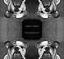 Quatro Dog by mrKIO