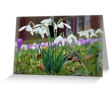 Snowdrops in the Sunshine Greeting Card
