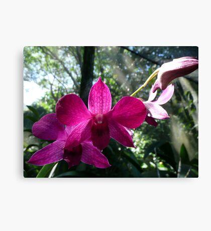 Fijian Purple Orchids - Garden of the Sleeping Giant Canvas Print