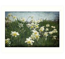 A Field of Daffodils Art Print
