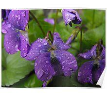 Life Giving Rain... Poster