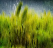 Bamboo Dreams by Tom Vaughan