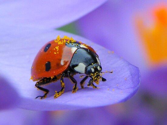 Pollen Lady by Yool