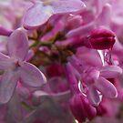 Liquid Purple by Tracy Wazny