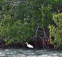 Great Egret by jaeepathak