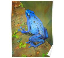 Electric Blue Poison Dart Frog Large Size Poster