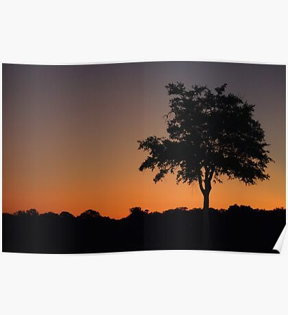 Sunset South Luangwa National Park Poster