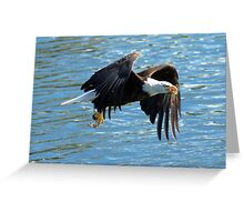 Eagle over water. Greeting Card