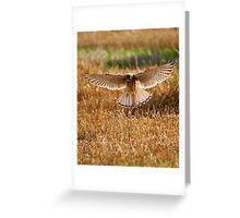 Kestrel on the hunt Greeting Card