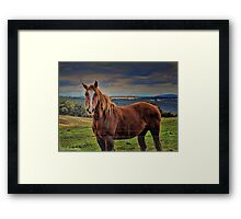 High Country Beauty Framed Print