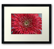 Red Star Framed Print