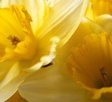 Golden Spring by Steve plowman