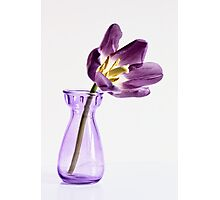 Shades of deep purple Photographic Print