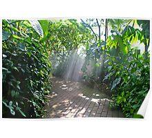 Misty Path Poster