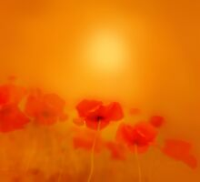 Poppies in gold'... by Valerie Anne Kelly