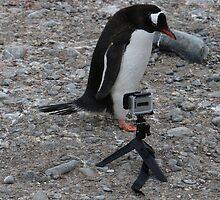 Gentoo Penguin in Antarctica & Go Pro  - 2 by Janai-Ami