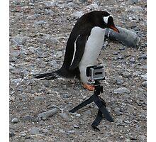 Gentoo Penguin in Antarctica & Go Pro  - 2 Photographic Print