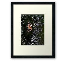 Web Developer Framed Print