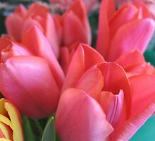 Please stand in the Tulip queue by MarianBendeth