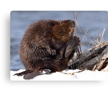 Be Wary Of Giant Rodents That Smile And Wave Canvas Print