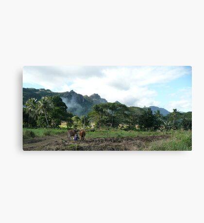 Man Adjusting his Plow - Base of the Sleeping Giant, Fiji Canvas Print