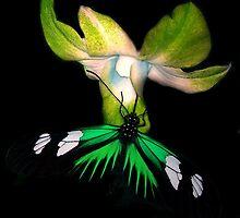Gathering Nectar by mark4321