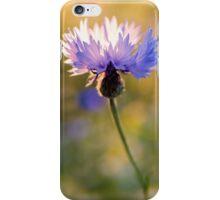 Wild Cornflower iPhone Case/Skin