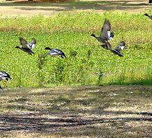 Ducks Down by PhoenixArt