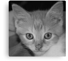 kitten, black & white Canvas Print