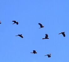 Black Cockatoos by PhoenixArt