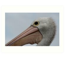 pelican close up Art Print