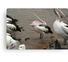 pelican being silly Canvas Print
