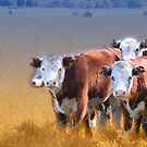 Cows in the grass by Judith Cahill