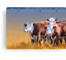 Cows in the grass Canvas Print