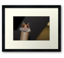 Candy the Hamster Framed Print