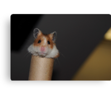 Candy the Hamster Canvas Print