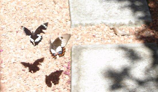 Beaut Butterflies by KazM