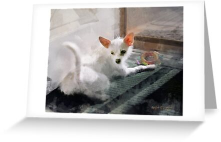My Little Cutie ~ Maggie May by Rhonda Strickland