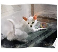 My Little Cutie ~ Maggie May Poster