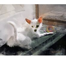My Little Cutie ~ Maggie May Photographic Print